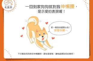 【汪汪行為學】一回家狗狗就對我伸懶腰,這是什麼意思呢?