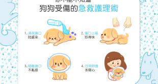 【不可不知】狗狗受傷怎麼辦?!4大急救護理術要知道!