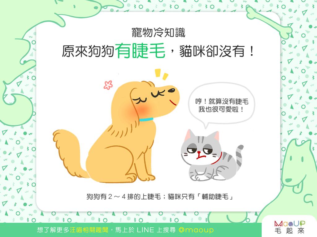 【汪喵冷知識】咦?原來只有狗狗有睫毛,貓貓卻沒有?!