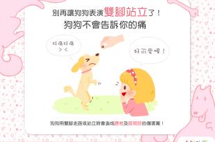 【汪汪康健】狗狗痛痛,但狗狗說不出口—別再讓牠雙腳站立了!