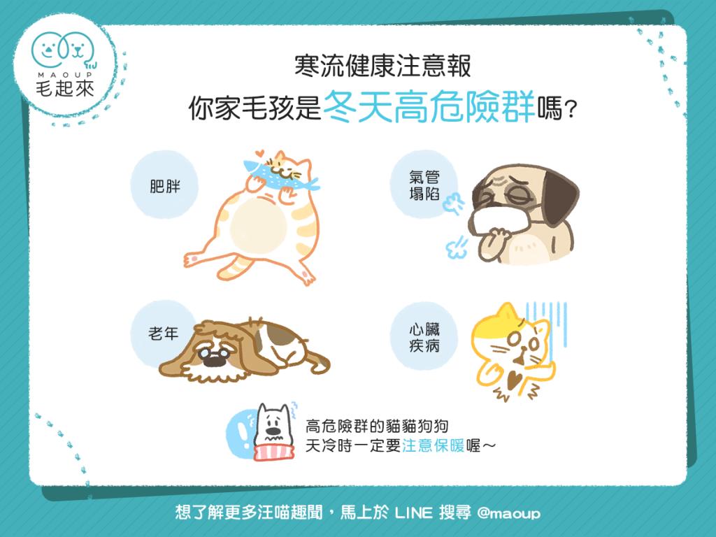 【寒流健康注意報】你家毛孩是冬天的高危險群嗎?