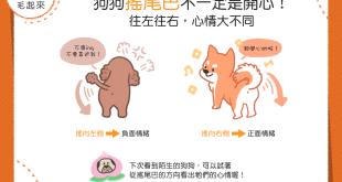 【汪汪冷知識】尾巴搖搖好開心?往左往右,狗狗心情大不同!