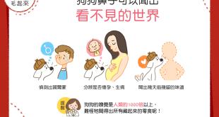 【汪汪小學堂】狗狗鼻子3特技-不用看也能「聞」出這些資訊!