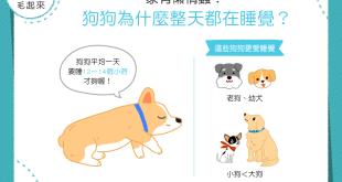 【汪汪行為學】家有懶惰蟲!狗狗為什麼整天都在睡覺?