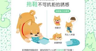 【汪汪行為學】拖鞋有這麼好吃?狗狗為什麼就愛這一味!?