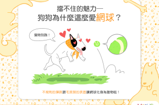 【汪汪真心話】網球魅力無法擋?狗狗為什麼這麼愛網球?!