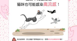 【貓奴千萬要注意】蝦咪!?貓貓竟然也會得禽流感?