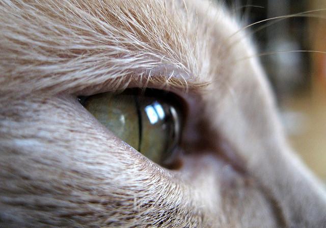 Milo eyelashes