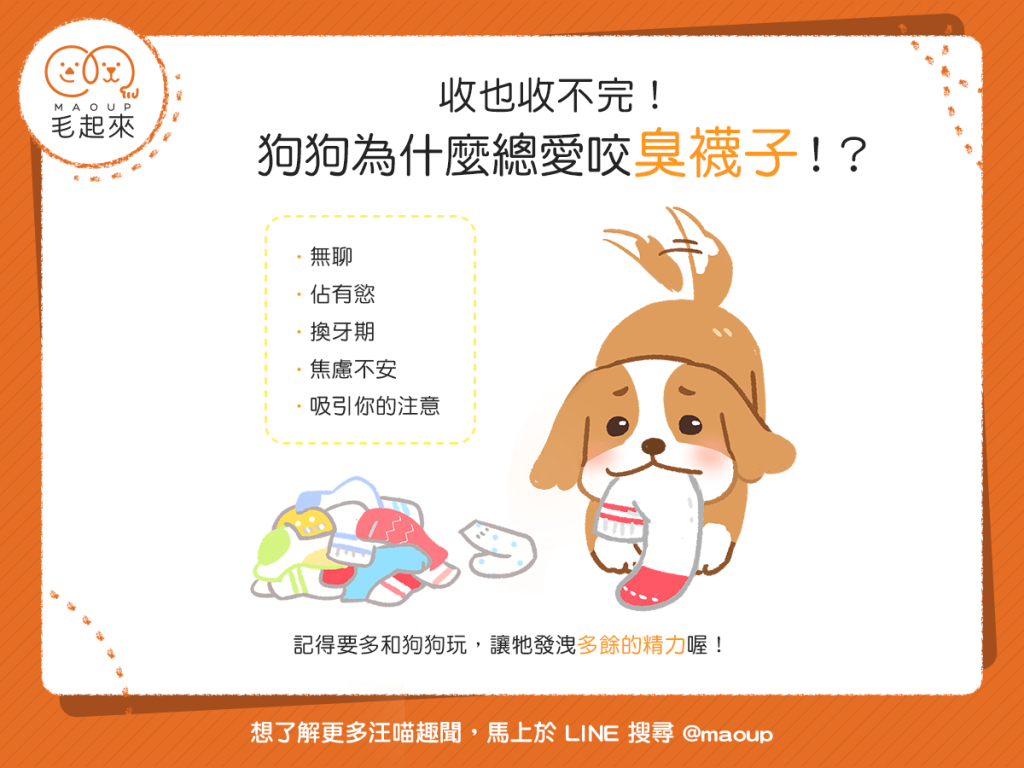 【汪汪行為學】崩潰~收也收不完!狗狗為什麼總愛咬臭襪子?