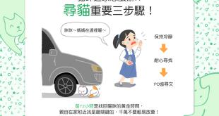 【不可不知】貓貓逃家了!?別慌!尋貓3步驟幫幫你!