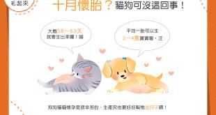 【汪喵小學堂】懷胎十月生寶寶?狗狗貓貓可等不了那麼久!