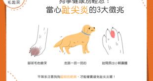 【汪汪康健】狗掌健康別輕忽——當心趾尖炎的3大徵兆!