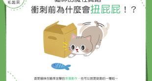 【喵喵行為學】貓咪的魔性舞蹈~衝刺前為什麼會扭屁屁?!