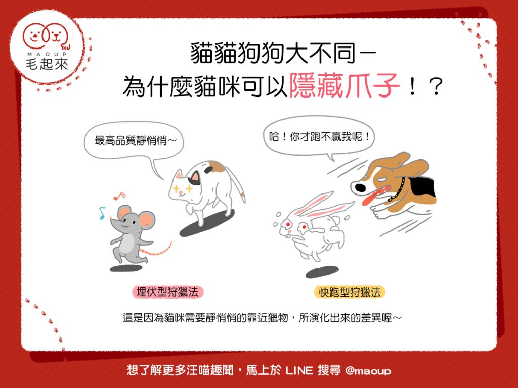 【喵汪知識加】貓貓狗狗大不同—原來只有貓咪可以隱藏爪子!?