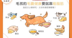 【毛孩食品解析】吃什麼能讓貓狗的毛髮柔亮滑順?答案是這5種脂肪!