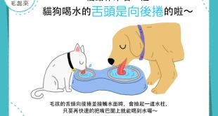 【汪喵冷知識】ㄟ~狗狗貓貓究竟是怎麼用舌頭喝水的咧?