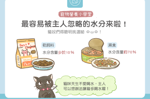 貓咪飼料罐頭水分多寡比較