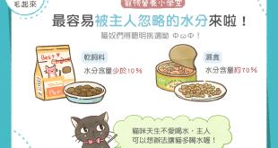【毛孩食品解析】貓奴最容易忽略?乾飼料、濕食水份比一比!