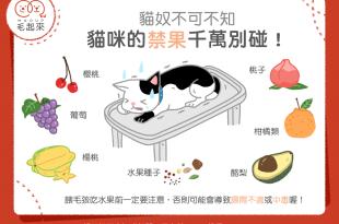 貓咪吃了會中毒的7種水果