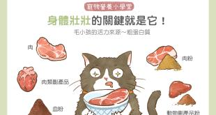 【毛孩食品解析】汪喵身體壯壯的關鍵就是它~粗蛋白質!