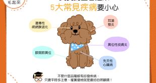 【汪汪康健】貴賓飼主看過來,貴賓狗的5大疾病要小心!