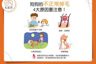 狗狗不正常掉毛的4大原因與應對方式
