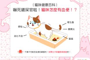 【喵喵康健】嚇死鏟屎官啦!貓貓怎麼有血便!?