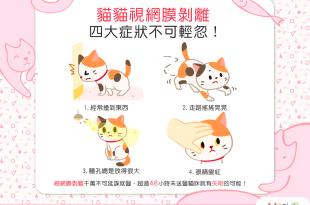 【喵喵康健】貓貓老是撞東撞西嗎?當心!可能是視網膜剝離!