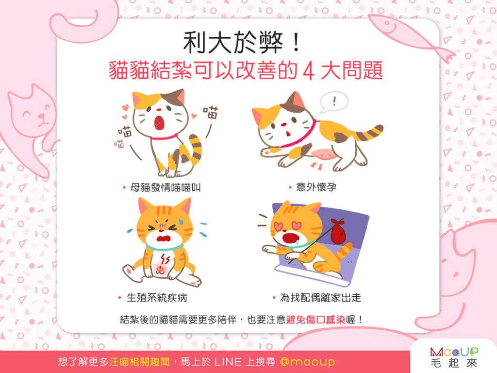 【喵喵康健】利大於弊!貓貓結紮可以改善的4大問題!