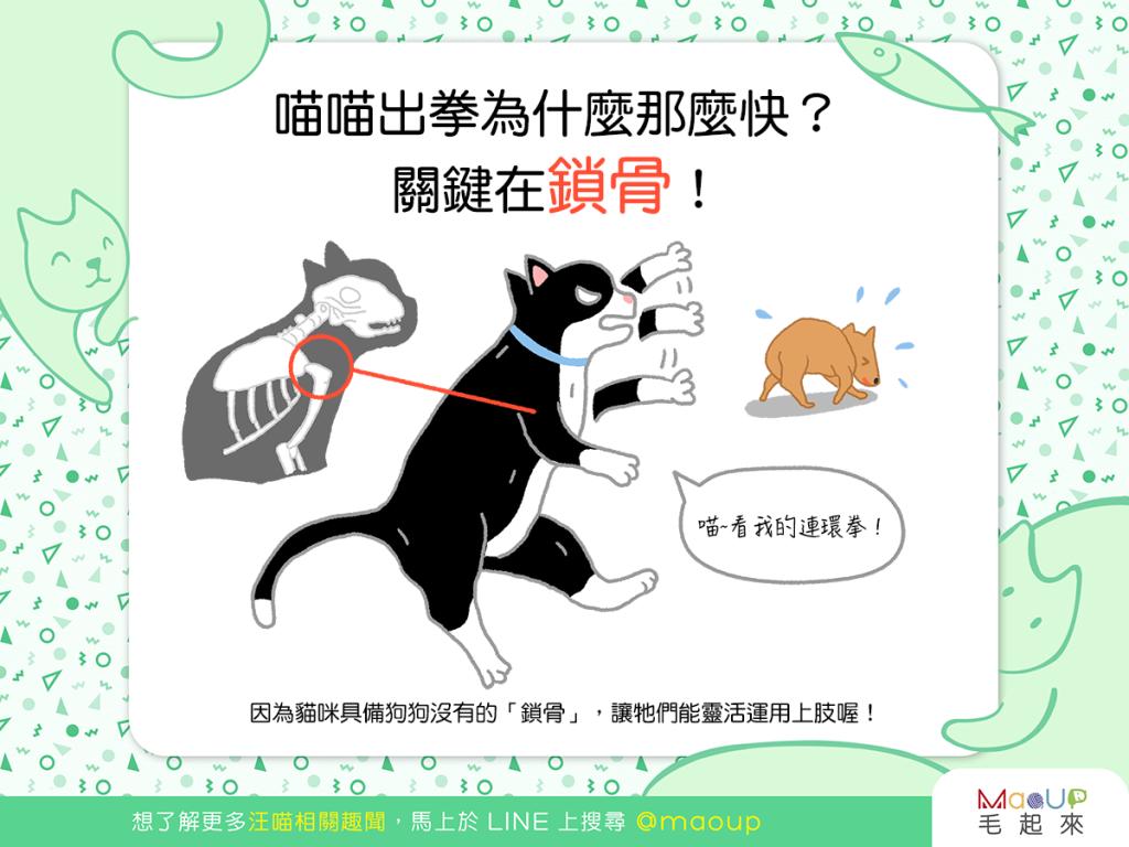 【喵喵知識加】吃本喵一記無影貓貓拳!貓貓拳為什麼那麼快?!