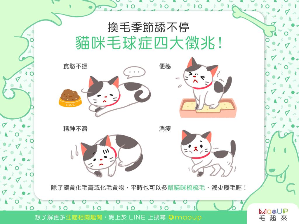 【喵喵康健】換毛季節舔不停?當心!貓咪可能得了毛球症!