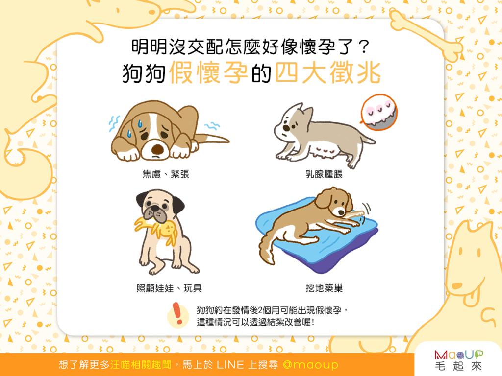 【汪汪康健】明明沒交配怎麼好像懷孕了?狗狗假懷孕的4大徵兆