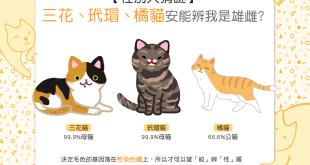 【性別猜一猜】三花vs.玳瑁vs.橘貓,安能辨我是雄雌?