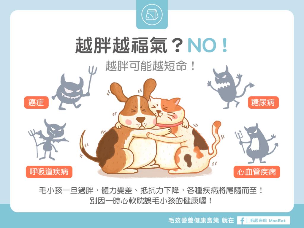 【肥胖汪喵飲食】越胖越福氣?NO!小心越胖越短命!