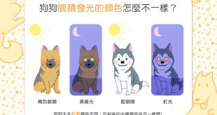 【夜間限定小觀察】ㄟ~狗狗眼睛發光的顏色居然不一樣?!