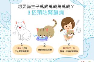 【喵喵康健】想要貓主子萬萬歲?3招預防腎臟病!