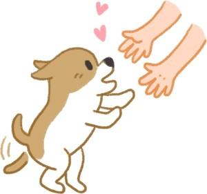 狗看到你回家超興奮代表狗愛你