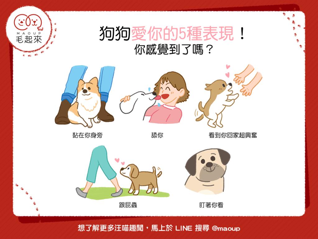 狗狗愛你的5種表現