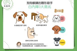【汪汪康健】狗狗眼睛的隱形殺手——白內障3大徵兆!