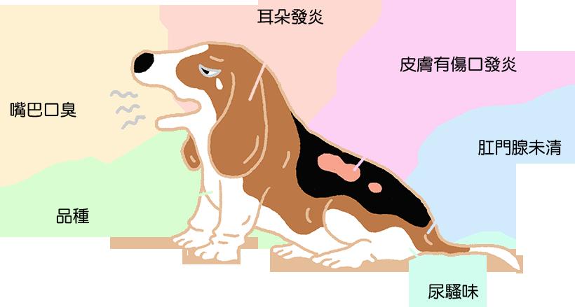 狗狗體味重的原因