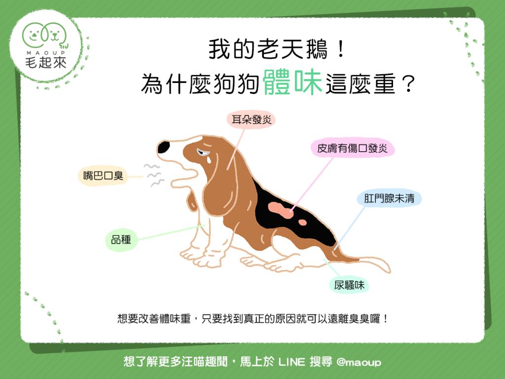 狗狗體味怎麼這麼重?