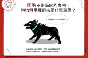 【狗語小教室】欸?狗狗居然也會炸毛嗎?!