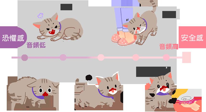 【喵喵真心話】貓咪比較喜歡女生?因為高音頻是友善的象徵哦!