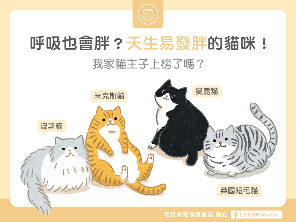 【肥胖汪喵飲食】呼吸也會胖?天生易發胖的貓咪!