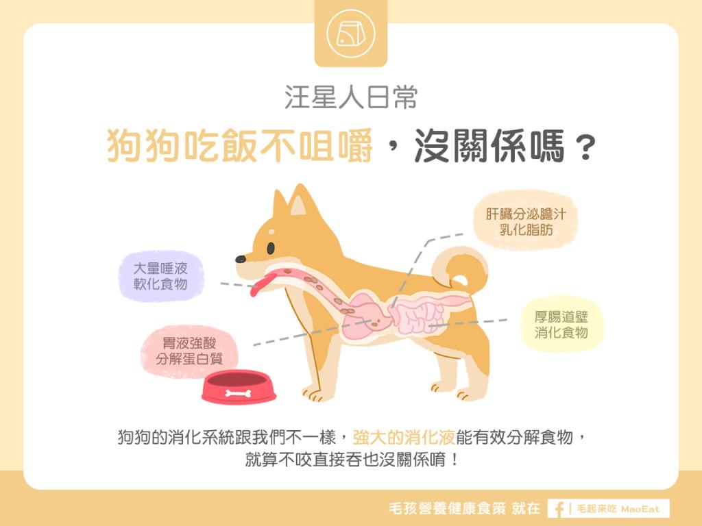 汪喵餵養知識狗狗吃飯不咀嚼沒關係嗎狗狗狼吞虎嚥狗狗噎到狗狗消話系統吞嚥吃飯太快