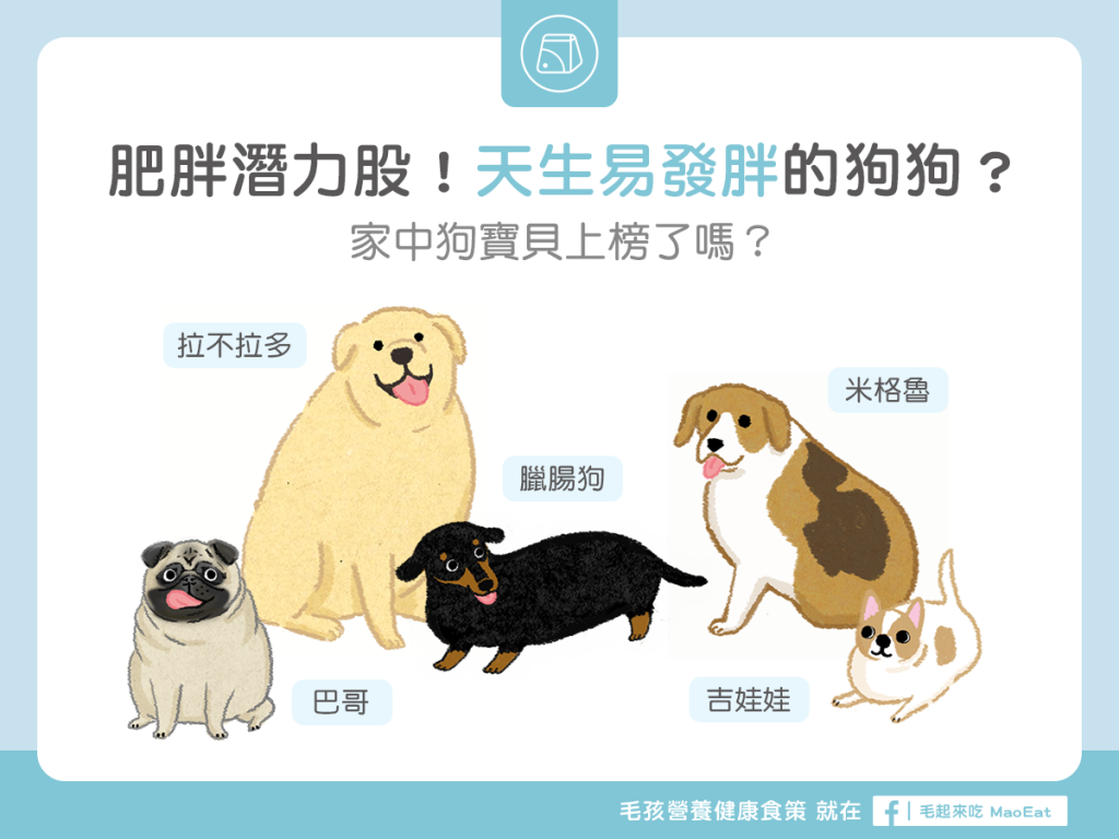 【肥胖汪喵飲食】肥胖潛力股?天生易發胖的狗狗品種!