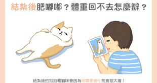 【肥胖汪喵飲食】結紮後肥嘟嘟?體重回不去怎麼辦?
