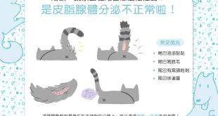 【喵喵康健】驚!貓貓尾巴怎麼油膩膩?!