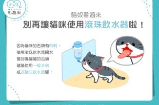 【汪喵餵養知識】貓奴看過來!別再讓貓咪使用滾珠飲水器啦!