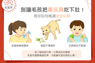 【汪喵餵養知識】別把毒玩具吃下肚!如何慎選安全玩具?